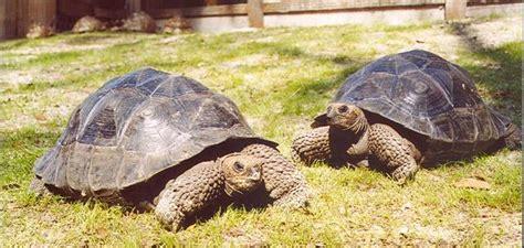 alimentazione tartarughe rettili alimentazione