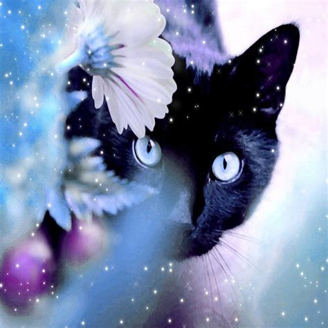 magic cat magic cat background wallpaperscript