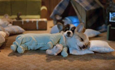 puppies in pajamas puppy pajamas