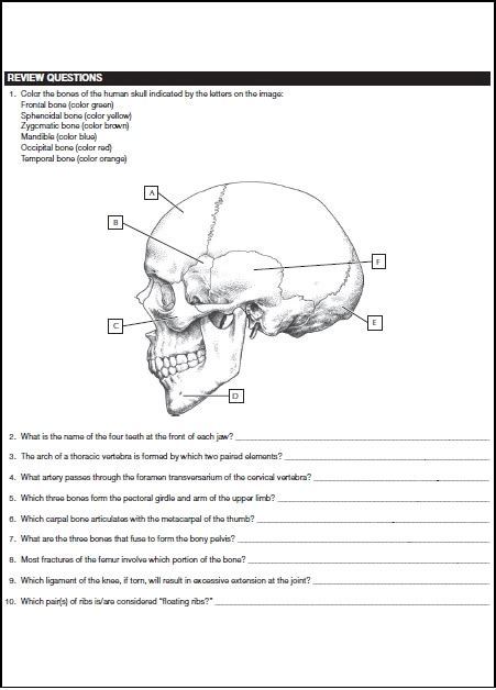 anatomy coloring book chapter 4 netter s anatomy coloring book pdf free direct link