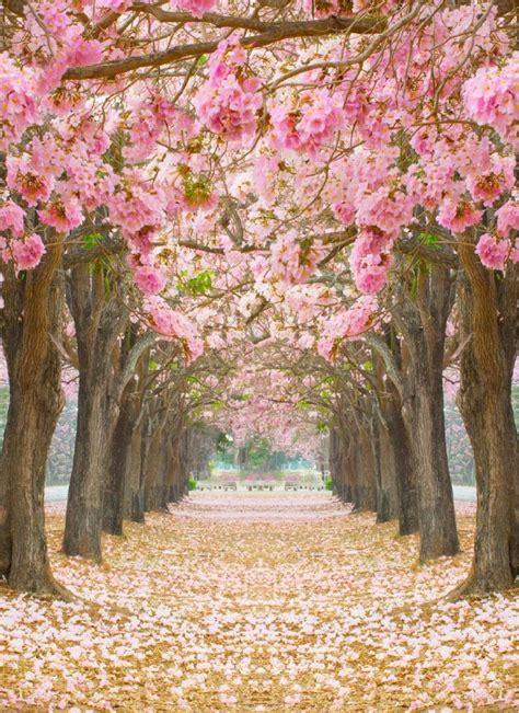 imagenes de flores y arboles papel mural de 225 rbol con hojas rosadas primavera