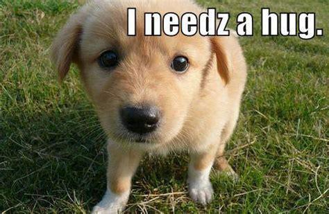 i need a puppy i need a hug dogs photo 11064612 fanpop