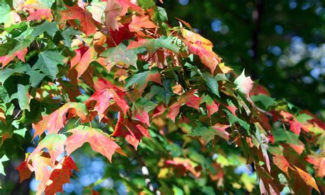color run youngstown peak fall colors in the valley expected by week s end
