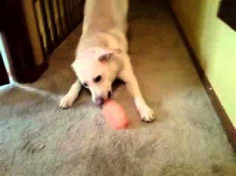 retarded puppy my mentally retarded