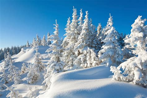 arctic background arctic background 7 background check all