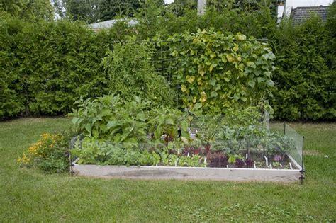 organic vegetable gardens vegetable garden seedling