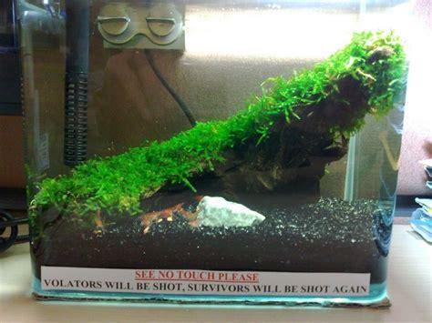 Shrimp Tank Aquascape by New Office Shrimp Tank Rescale