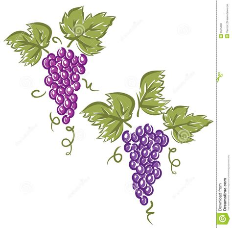 grapes vector stock vector illustration of food autumn