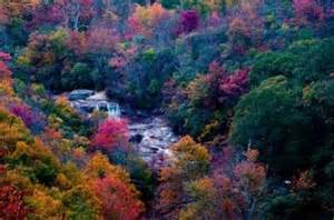 carolina fall colors leaves start changing in nc mountains fall color map
