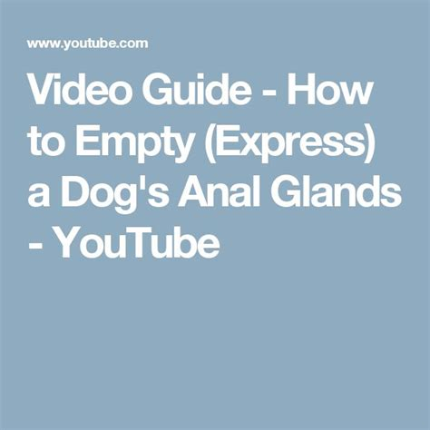 how to express glands in dogs 349 best images about pet on border collies for dogs and