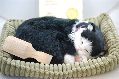 stuffed animals cats black white shorthair cat like stuffed animal