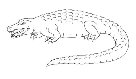 Free Printable Alligator Coloring Pages For Kids Alligator Coloring Pages