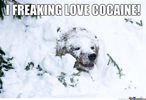 Coke Bear Meme - coke bear by sirwadewilson meme center
