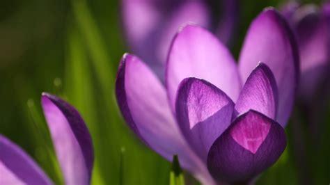 image of spring flowers spring flowers spring wallpaper 22176446 fanpop