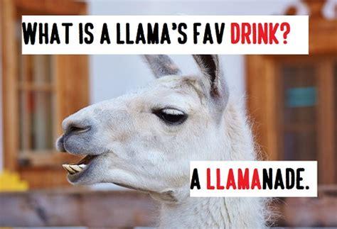 top  llama alpaca pick  linespunsjokes
