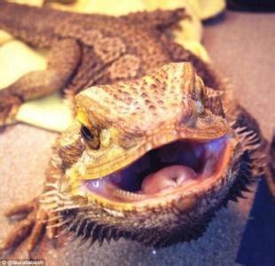 animale vanitoso animal selfie in un nuovo libro i migliori autoscatti