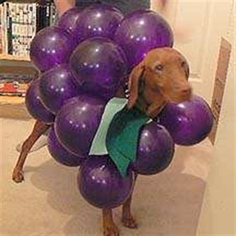 are grapes bad for dogs are grapes bad for dogs a pet health guide tag