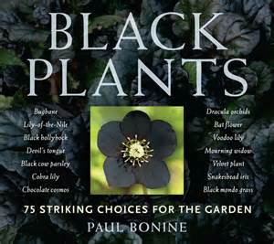 Plants That Grow In Complete Darkness by Black Plants 75 Striking Choices For The Garden From