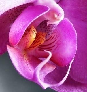 fiori viola significato significato fiori orchidee viola regalare piante