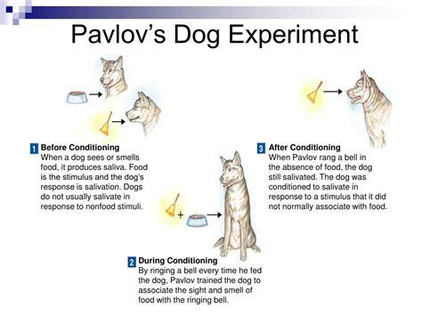 pavlov experiment ppt animal behavior powerpoint presentation id 356828