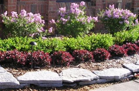 shrubs atlanta georgia landscaping company