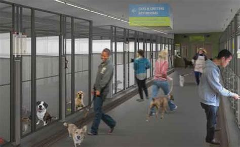 seattle animal shelter dogs among the animals seattle animal shelter gets upgrades city living seattle