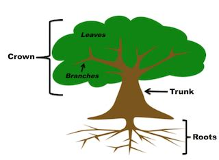 labeled tree diagram parts of a tree lesson for functions diagram