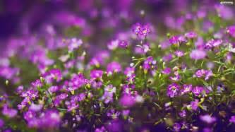 Hd Images Of Flowers Purple Flowers Wallpaper Hd