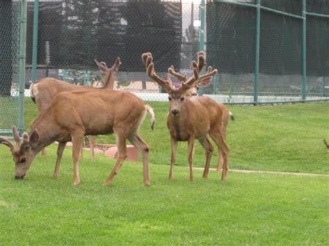 Garden Of The Gods Wildlife Wildlife Hanging Out At The Tennis Courts Picture Of