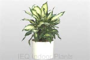 best indoor low light plants best indoor plants brisbane zanzibar gem low light plants