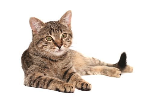 can you train a cat to go outside for bathroom pet s corner can you train your cat around dulwich