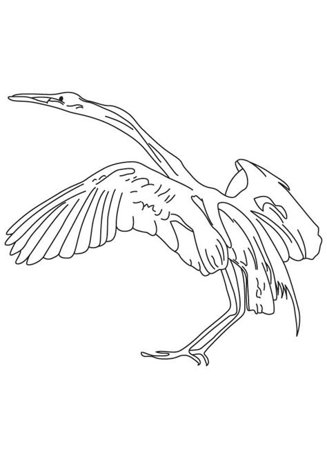 egret color free coloring pages of snowy egrets