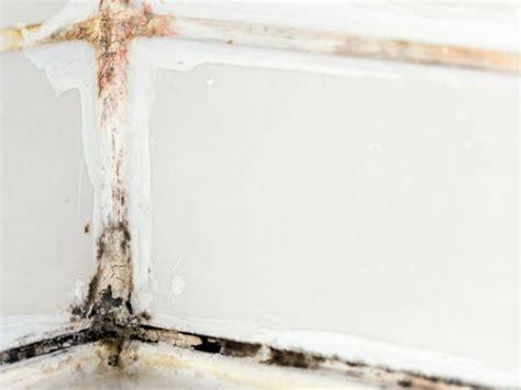 remove black mold hgtv