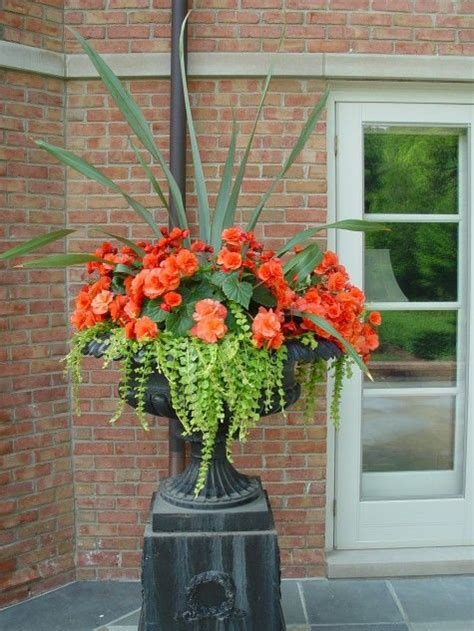 Container Plant Ideas Front Door by Stunning Orange Begonias With Creeping Floweres