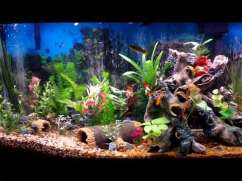 Decorating Ideas For Fish Tank Freshwater Fish Tank Decoration Ideas Fish Tank