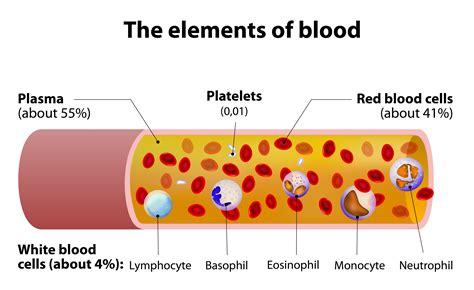 The Of Blood blood plasma diagram www pixshark images galleries