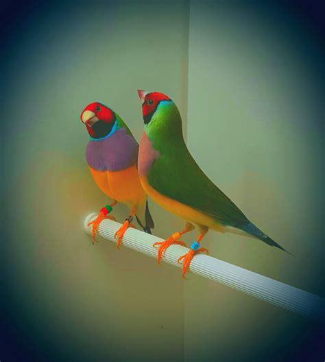 Vital L Spectrum Light For Birds 100 Images