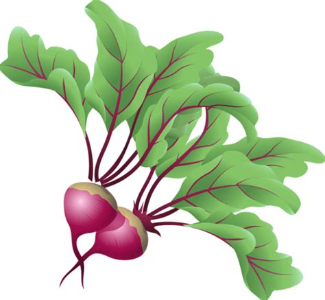 beet clipart vegetables