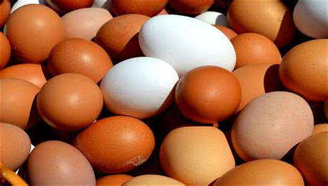 are eggs vegetarian or non vegetarian scientists finally put an end to the debate