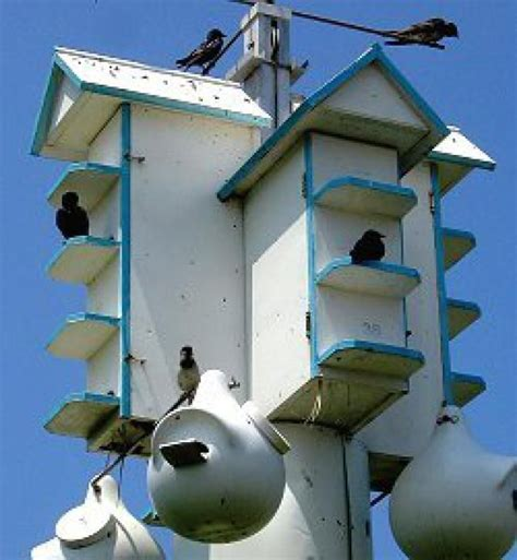 purple martin houses 25 best ideas about purple martin on pinterest may martin purple martin house and