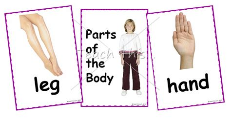 printable body part flashcards for toddlers parts of the body printable picture theme flash cards