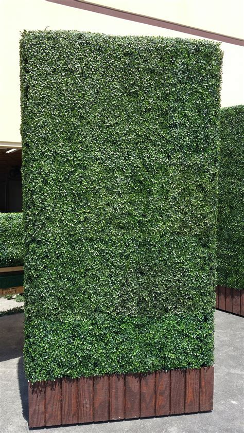 Another one, what a beauty! Artificial boxwood hedge panel
