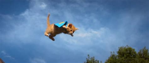 flying puppies flying kittens vs flying puppies huffpost