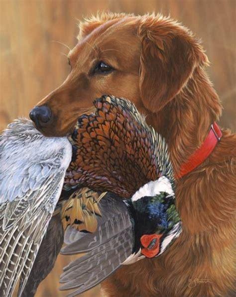 golden retriever for pheasant ring necked pheasant history