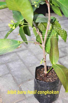 Pupuk Cair Npk Matahari 1liter tips mencangkok tanaman buah leira buah tropis