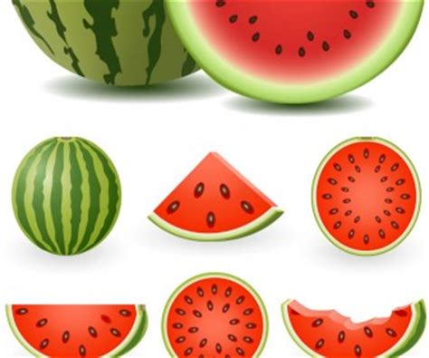 Semangka Vektor watermelon vector vector graphics
