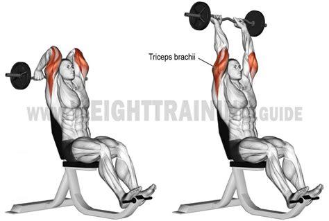 Triceps Banc by Comment Effectuer Les Extensions Triceps Barre Ez Sur Banc