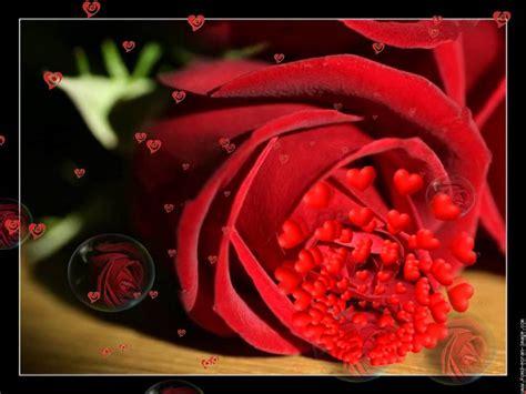 imagenes rosas llorando quot el cielo esta llorando flores quot de tony medina youtube