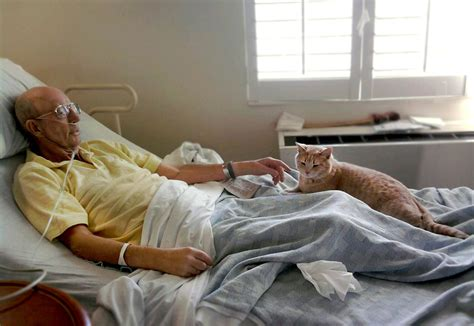 bed bound patient tabby cat makes life easier for dying veterans veterans