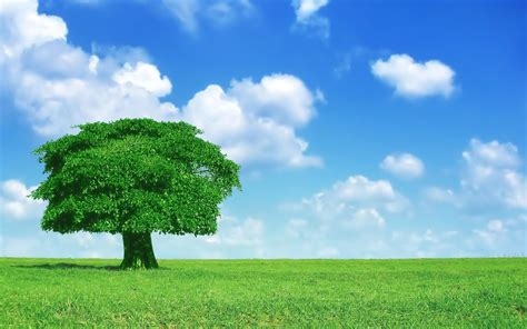 only nature beautiful tree wallpapers lonely tree wallpaper 1164